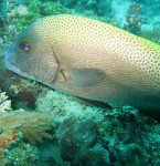 Diving Sites in Malaysia