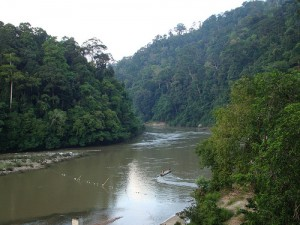 Wilderness In Malaysia National Park